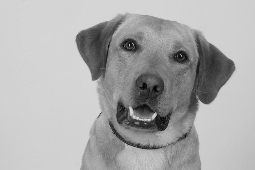 Tierportraitfotos von KB-Fotografie fotografiert von Kristina Bruns Fotografin in Witten Herbede