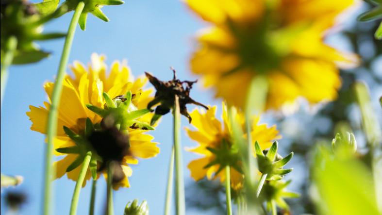 Aus Sicht einer Ameise